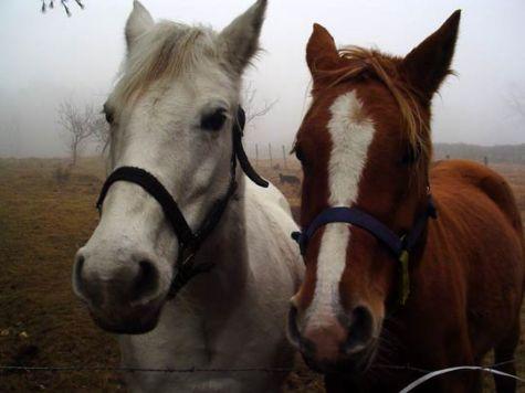 sfilata-dei-cavalli